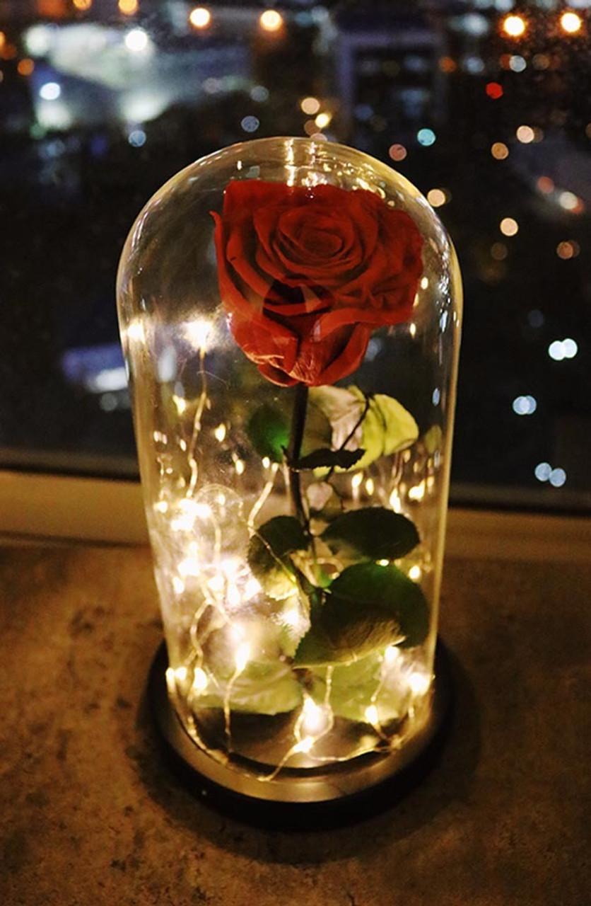 Red Preserved Rose Fairy Lights Dome - Best Seller!