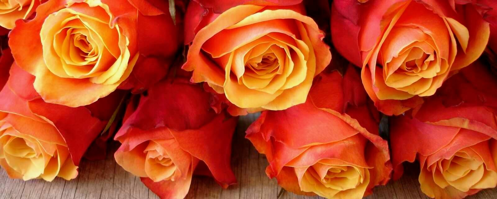korean-roses-philippines.jpeg