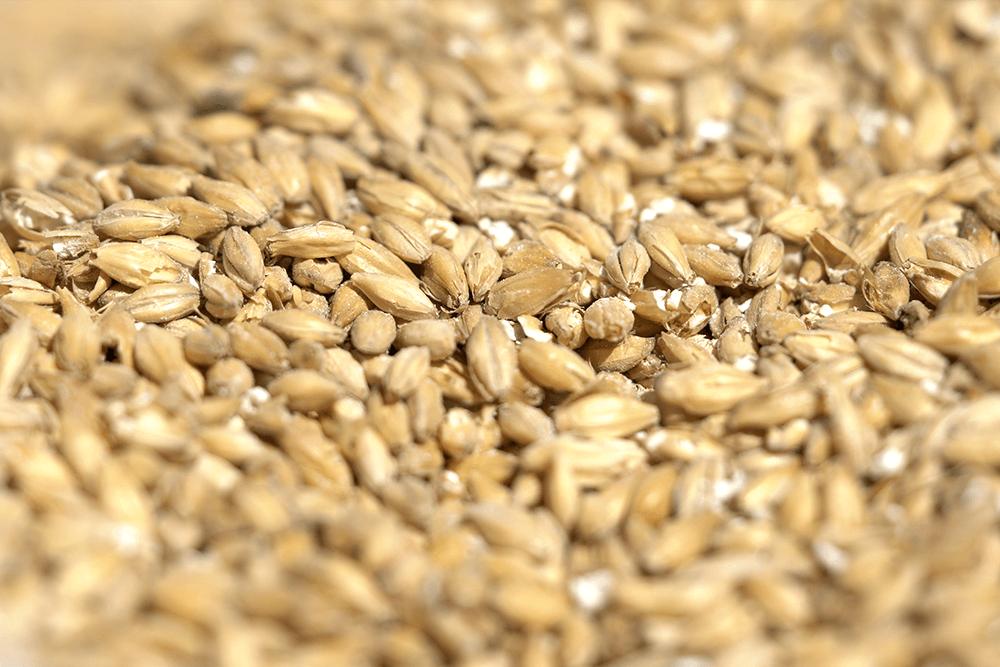 The Brewboys locally sourced grain