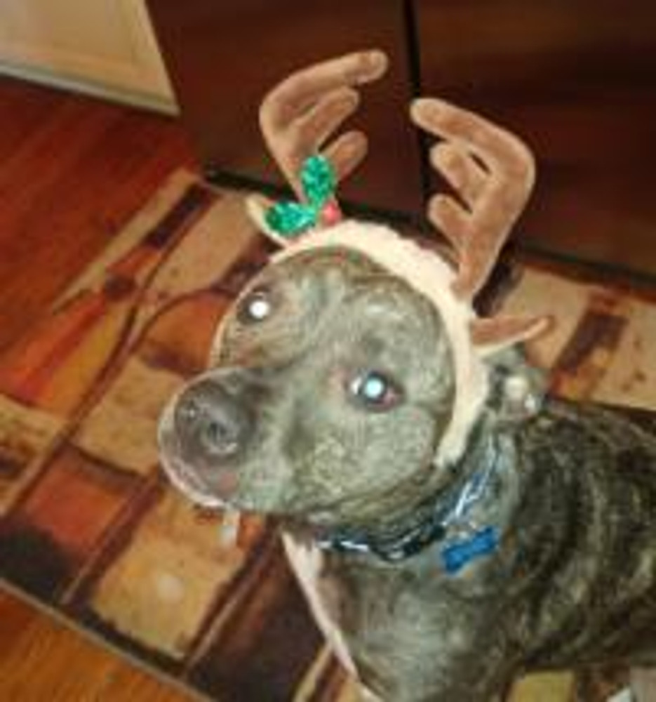 DAY 2 of Savas Beatie's 12 Days of Christmas Specials!