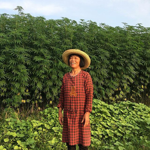 Hemp in China