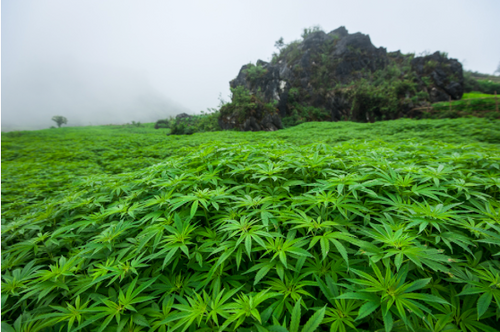 The Tipping Point for Hemp