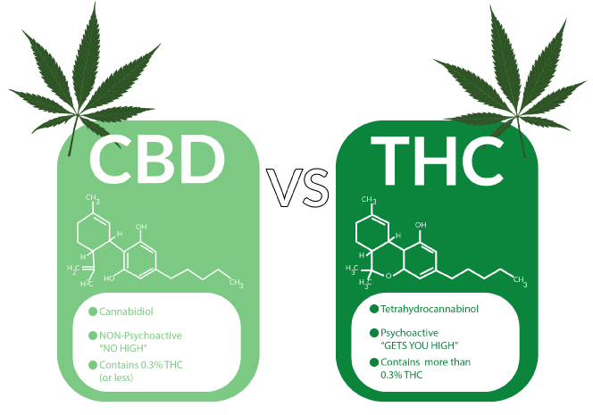 cbd-thc-infographic-final.png