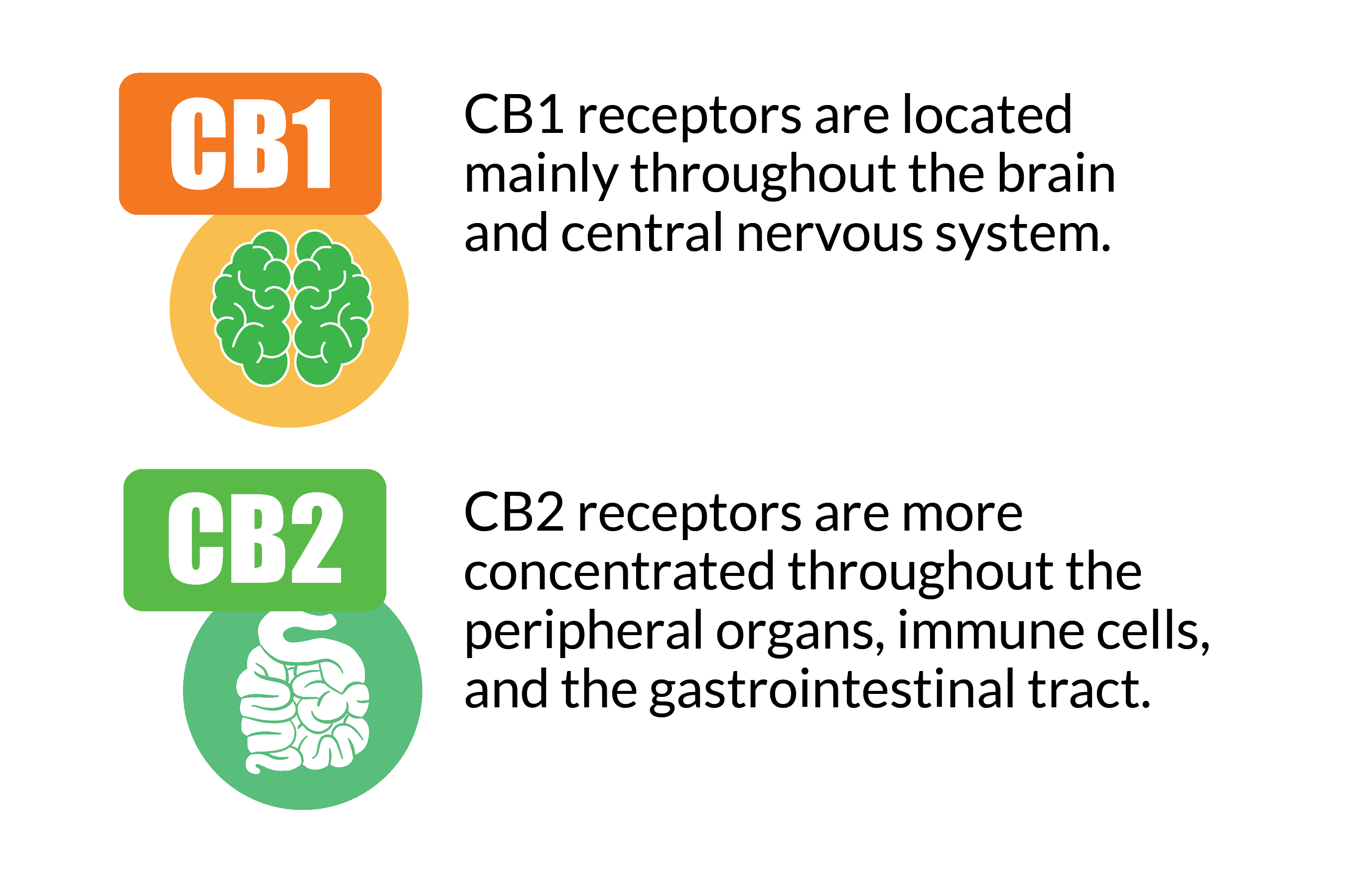 Endocannabinoid receptors in the body