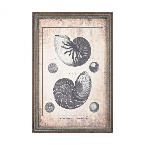 Home Decor By Sterling Industries Shell Print in Blue 3138-245