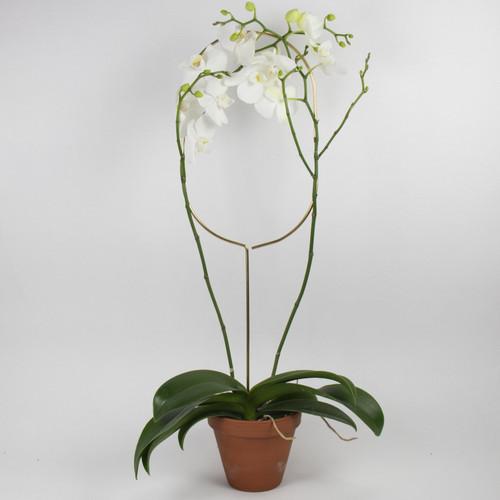 Botanopia Plant Stake Arch