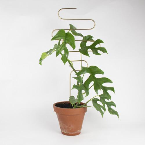 Botanopia Plant Stake Squiggle
