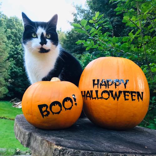 Halloween Pumpkin Label