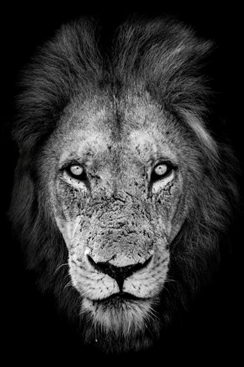 Robert Irwin Lion Face Large Canvas - Australia Zoo