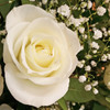 White Rose Sympathy Arrangement by Savilles Country Florist. Flower delivery to Orchard Park, Hamburg, West Seneca, East Aurora, Buffalo, NY and surrounding suburbs.