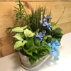 Blue Country Garden Large by Savilles Country Florist.  Delivering plants throughout Buffalo and the surrounding suburbs.