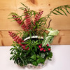Holly Jolly Garden (SCF18C18) by Savilles Country Florist.  Christmas Flower Arrangements, Centerpieces and Plant delivery to Orchard Park, NY and the surrounding area including same day delivery to Hamburg, West Seneca, East Aurora, Blasdell and Buffalo NY