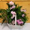 Blooms of Beauty Garden (SCF7009G)