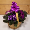 Appreciation Basket of Violets by Savilles Country Florist. Flower delivery to Orchard Park, Hamburg, West Seneca, East Aurora, Buffalo, NY and surrounding suburbs.