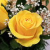 Rose Elegance Yellow by Savilles Country Florist. Flower delivery to Orchard Park, Hamburg, West Seneca, East Aurora, Buffalo, NY and surrounding suburbs.