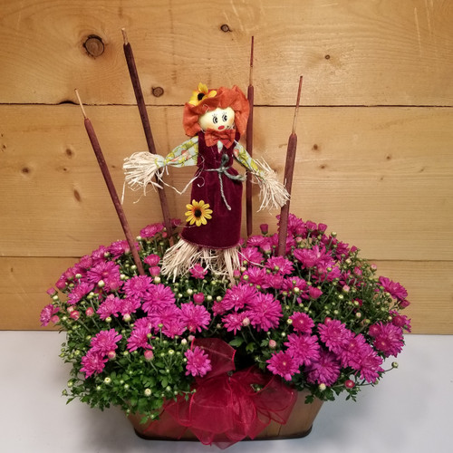 Autumn Wishes Mum (SCF2014) by Savilles Country Florist.  Flower and Plant delivery to Orchard Park, NY and the surrounding area including same day delivery to Hamburg, West Seneca, East Aurora, Blasdell and Buffalo NY