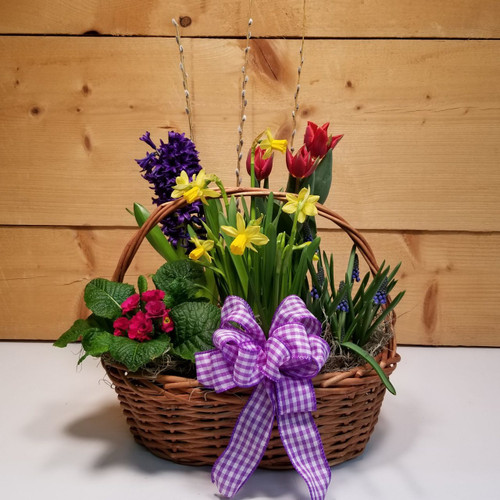 Springtime Dreams (SCF19D25) by Savilles Country Florist.  Flower and Plant delivery to Orchard Park, NY and the surrounding area including same day delivery to Hamburg, West Seneca, East Aurora, Blasdell and Buffalo NY