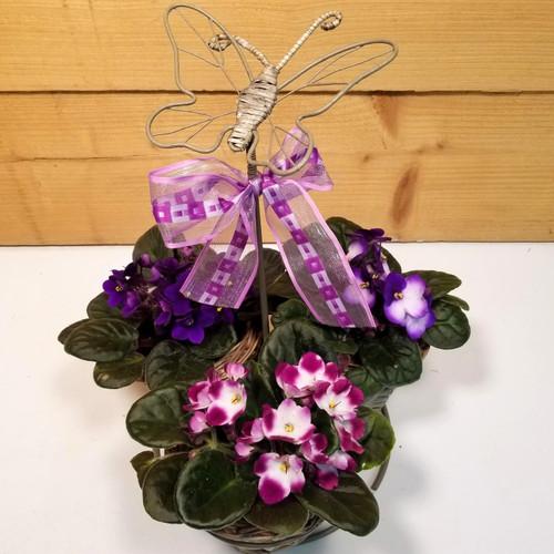 Vibrant Violets (SCF17MD03)
