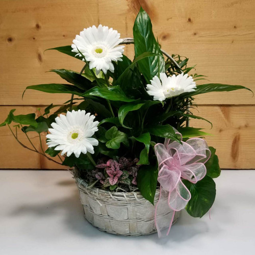 Garden of Delight (SCF19DG05) by Savilles Country Florist.  Flower and Plant delivery to Orchard Park, NY and the surrounding area including same day delivery to Hamburg, West Seneca, East Aurora, Blasdell and Buffalo NY