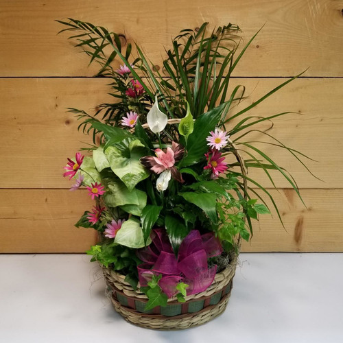 Garden of Expression (SCF19DG01) by Savilles Country Florist.  Flower and Plant delivery to Orchard Park, NY and the surrounding area including same day delivery to Hamburg, West Seneca, East Aurora, Blasdell and Buffalo NY