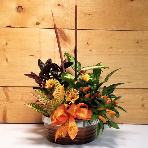 Autumn Splendor (SCF17F18) Plants and dish gardens by Savilles Country Florist
