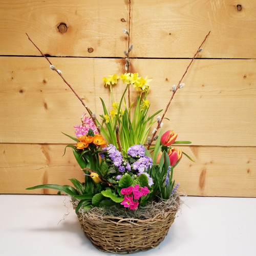 Sunshine Garden (SCF19D17) by Savilles Country Florist.  Flower and Plant delivery to Orchard Park, NY and the surrounding area including same day delivery to Hamburg, West Seneca, East Aurora, Blasdell and Buffalo NY