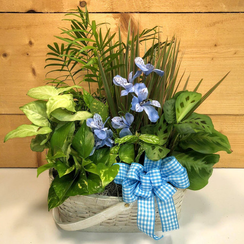 Blue Country Garden Large (SCFDG10) by Savilles Country Florist.  Flower and Plant delivery to Orchard Park, NY and the surrounding area including same day delivery to Hamburg, West Seneca, East Aurora, Blasdell and Buffalo NY