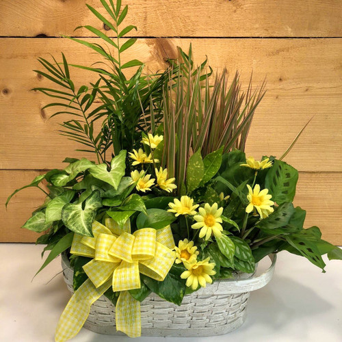 Yellow Country Garden Large (SCFDG12) by Savilles Country Florist.  Flower and Plant delivery to Orchard Park, NY and the surrounding area including same day delivery to Hamburg, West Seneca, East Aurora, Blasdell and Buffalo NY