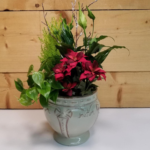 Seasons Greetings Garden (SCF18C17) by Savilles Country Florist.  Christmas Flower Arrangements, Centerpieces and Plant delivery to Orchard Park, NY and the surrounding area including same day delivery to Hamburg, West Seneca, East Aurora, Blasdell and Buffalo NY