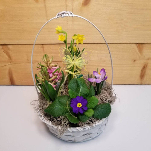 Butterfly Dreams Garden (SCF19DG08) by Savilles Country Florist.  Flower and Plant delivery to Orchard Park, NY and the surrounding area including same day delivery to Hamburg, West Seneca, East Aurora, Blasdell and Buffalo NY