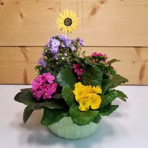 Better Days Garden (SCF19DG09) by Savilles Country Florist.  Flower and Plant delivery to Orchard Park, NY and the surrounding area including same day delivery to Hamburg, West Seneca, East Aurora, Blasdell and Buffalo NY