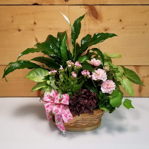 Pink Rose Dish Garden - Deluxe (SCF19D45) by Savilles Country Florist.  Flower and Plant delivery to Orchard Park, NY and the surrounding area including same day delivery to Hamburg, West Seneca, East Aurora, Blasdell and Buffalo NY