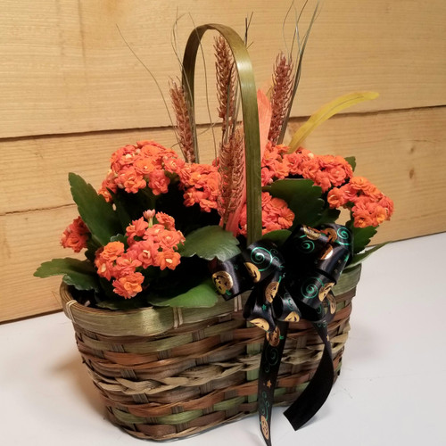 Halloween Kalanchoe (SCF19F07) by Savilles Country Florist.  Flower and Plant delivery to Orchard Park, NY and the surrounding area including same day delivery to Hamburg, West Seneca, East Aurora, Blasdell and Buffalo NY