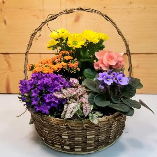 Saville's Six Plant Basket (SCF20D38)