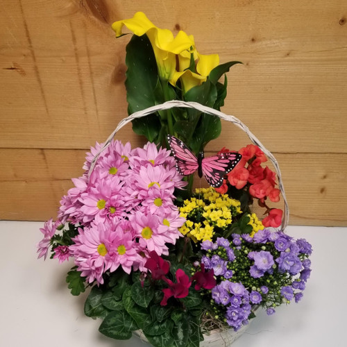 6 Flowering Plant Basket (SCF21D14)