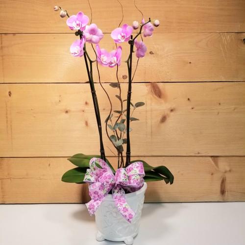 Orchids of Love (SCF21D41)