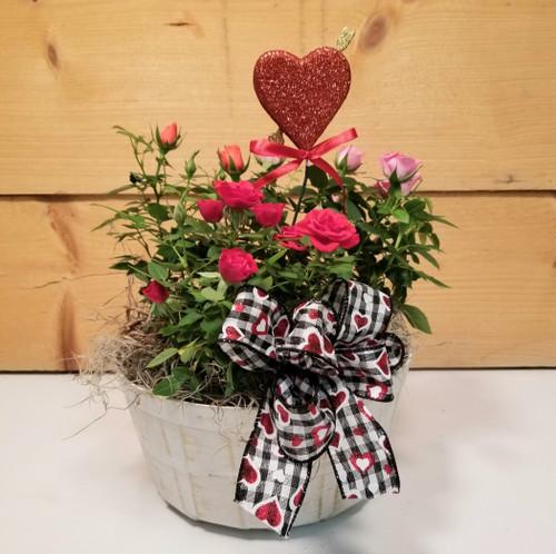 Rose Garden Basket (SCF21D54)