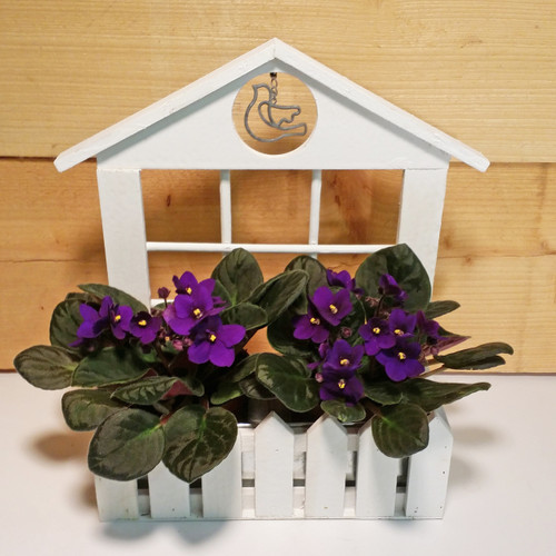 Violet Window Box  SCF6509