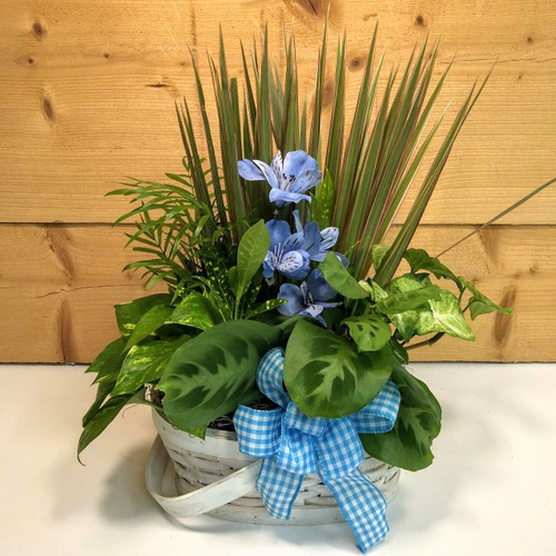 Blue Country Garden Medium (SCFDG09) by Savilles Country Florist.  Flower and Plant delivery to Orchard Park, NY and the surrounding area including same day delivery to Hamburg, West Seneca, East Aurora, Blasdell and Buffalo NY