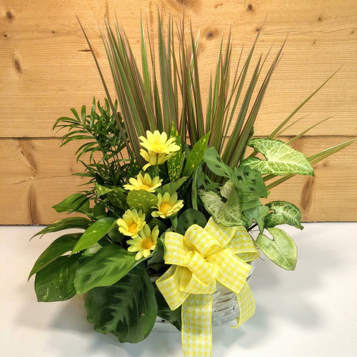 Yellow Country Garden Medium (SCFDG11) by Savilles Country Florist.  Flower and Plant delivery to Orchard Park, NY and the surrounding area including same day delivery to Hamburg, West Seneca, East Aurora, Blasdell and Buffalo NY