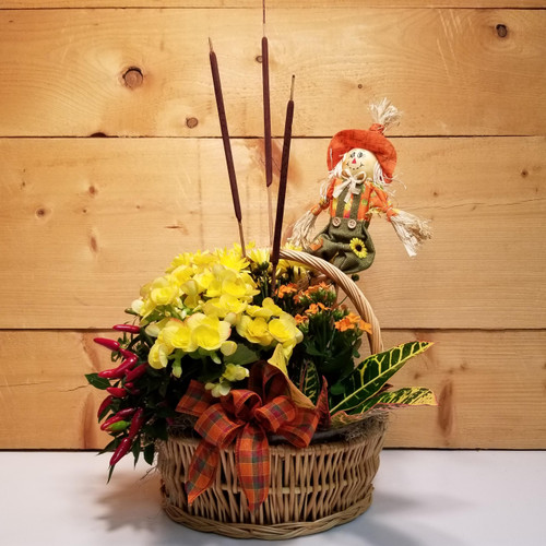 Autumn Blooms (SCF2022) by Savilles Country Florist.  Flower and Plant delivery to Orchard Park, NY and the surrounding area including same day delivery to Hamburg, West Seneca, East Aurora, Blasdell and Buffalo NY