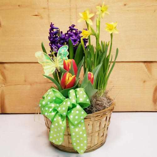 Bloomin' Bulbs (SCF19D16) by Savilles Country Florist.  Flower and Plant delivery to Orchard Park, NY and the surrounding area including same day delivery to Hamburg, West Seneca, East Aurora, Blasdell and Buffalo NY