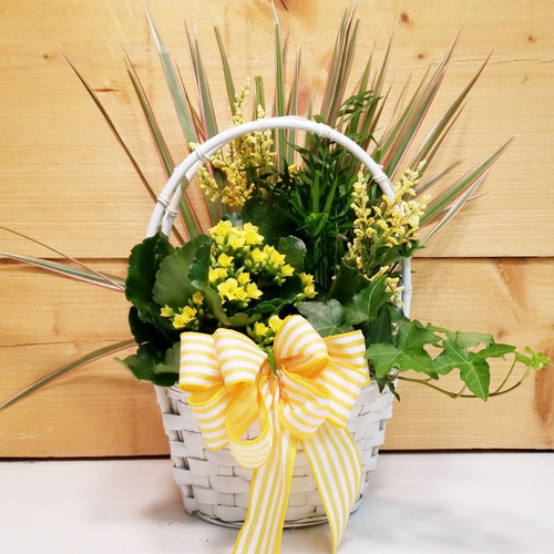 Sunny Day Dish Garden (SCF19D39) by Savilles Country Florist.  Flower and Plant delivery to Orchard Park, NY and the surrounding area including same day delivery to Hamburg, West Seneca, East Aurora, Blasdell and Buffalo NY