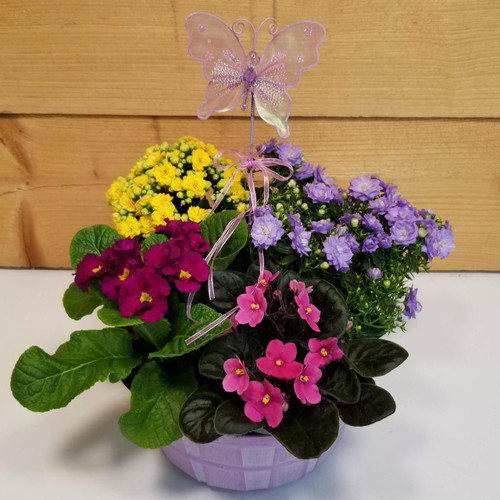 Blooming for You (SCF19D20) by Savilles Country Florist.  Flower and Plant delivery to Orchard Park, NY and the surrounding area including same day delivery to Hamburg, West Seneca, East Aurora, Blasdell and Buffalo NY