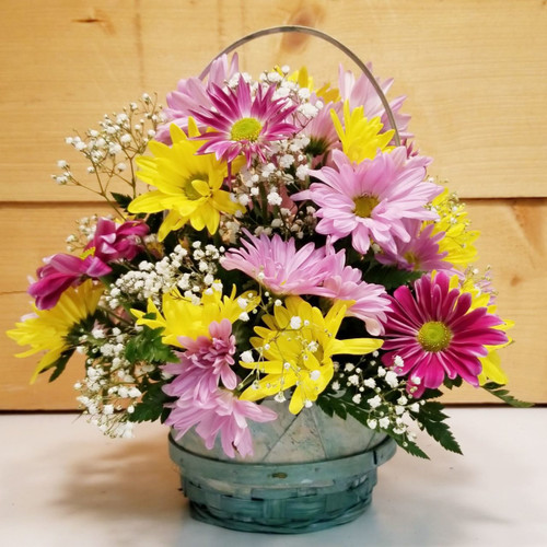 Crazy for Daisy (SCF19D12) by Savilles Country Florist.  Flower and Plant delivery to Orchard Park, NY and the surrounding area including same day delivery to Hamburg, West Seneca, East Aurora, Blasdell and Buffalo NY
