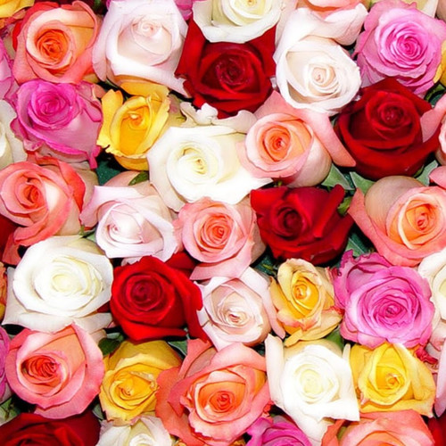 30 Roses Vased (SCF30ROSE) by Savilles Country Florist.  Flower and Plant delivery to Orchard Park, NY and the surrounding area including same day delivery to Hamburg, West Seneca, East Aurora, Blasdell and Buffalo NY