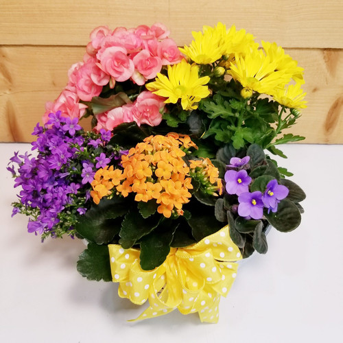 Five Blooms 4 U (SCF19D32) by Savilles Country Florist.  Flower and Plant delivery to Orchard Park, NY and the surrounding area including same day delivery to Hamburg, West Seneca, East Aurora, Blasdell and Buffalo NY