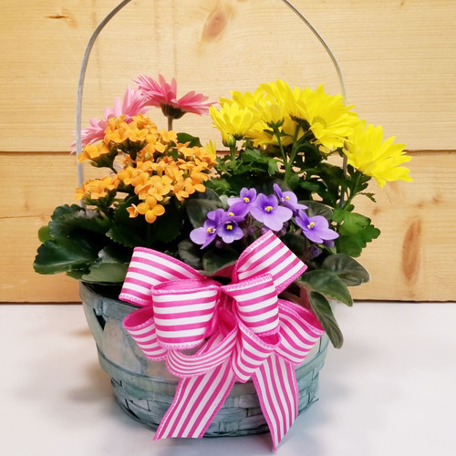Four Blooms 4 U (SCF19D33) by Savilles Country Florist.  Flower and Plant delivery to Orchard Park, NY and the surrounding area including same day delivery to Hamburg, West Seneca, East Aurora, Blasdell and Buffalo NY