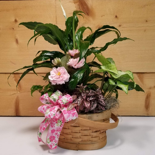 Pink Rose Dish Garden - Standard (SCF19D44) by Savilles Country Florist.  Flower and Plant delivery to Orchard Park, NY and the surrounding area including same day delivery to Hamburg, West Seneca, East Aurora, Blasdell and Buffalo NY