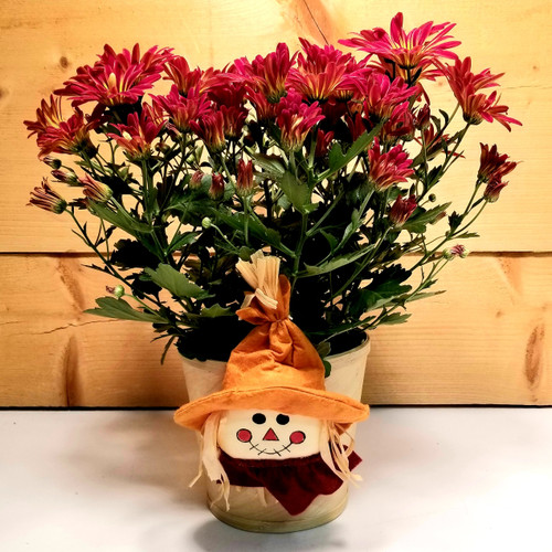 Not So Scary Mum (SCF19F12) by Savilles Country Florist.  Flower and Plant delivery to Orchard Park, NY and the surrounding area including same day delivery to Hamburg, West Seneca, East Aurora, Blasdell and Buffalo NY